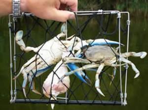 Crab Hawk